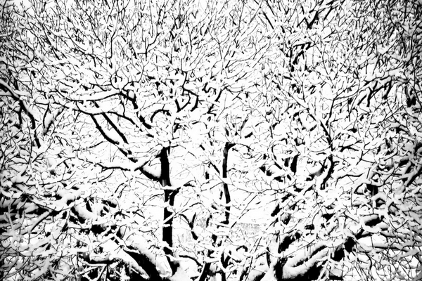 In the Mix - Snowy Tree