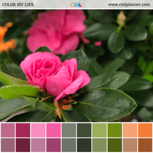 Pink Azaleas - Color Inspiration from Color My Life