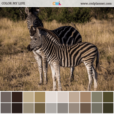 Zebra Stripes - Color Inspiration from Color My Life