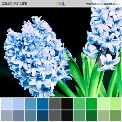 Blue Hyacinth - Color Inspiration from Color My Life