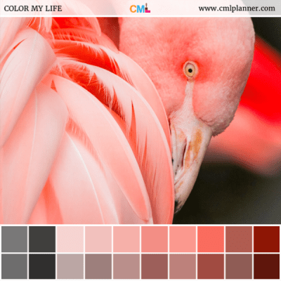 Flamingo - Color Inspiration from Color My Life