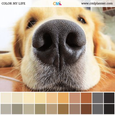 Under Your Nose - Color Inspiration from Color My Life