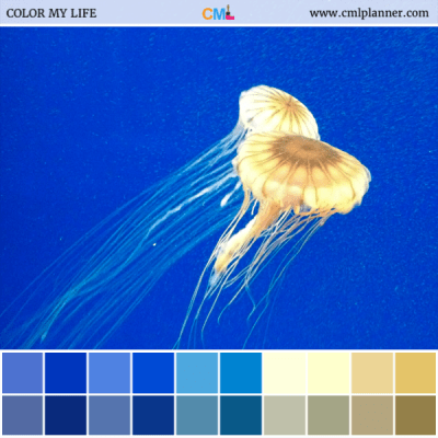 Deep Blue - Color Inspiration from Color My Life