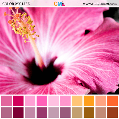Micro Pink - Color Inspiration from Color My Life