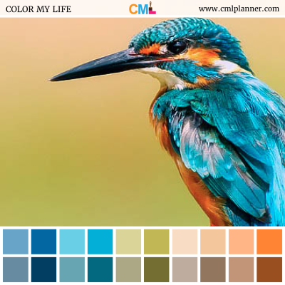 Kingfisher - Color Inspiration from Color My Life