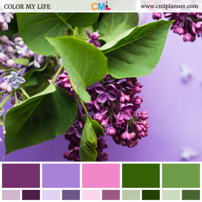 Violet Chroma - Color Inspiration from Color My Life