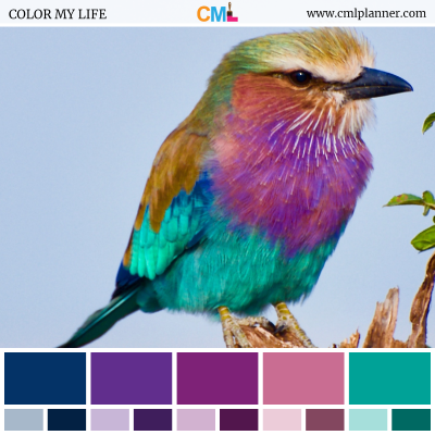 Color Palette #070618 - Color Inspiration from Color My Life