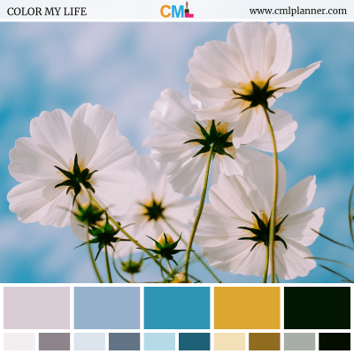 Color Palette #071318 - Color Inspiration from Color My Life