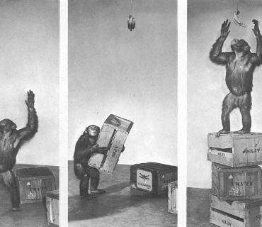 monkey-stacking-boxes-cmo4hire-stephdokin.jpg