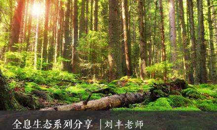 大自然的能量平衡 – 全息生态系列(二)