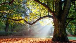 árboles en un bosque caducifolio