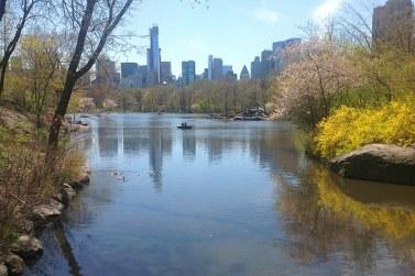 Automne dans Central Park