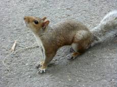 L'un des nombreux petits habitants de Central Park