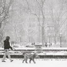 Central Park sous la neige