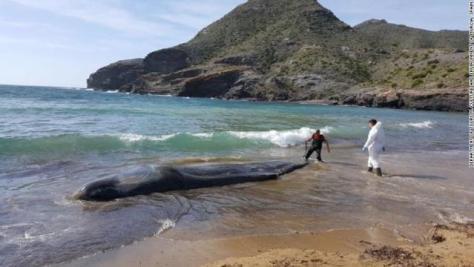 死んだマッコウクジラの体内から大量のごみがみつかった