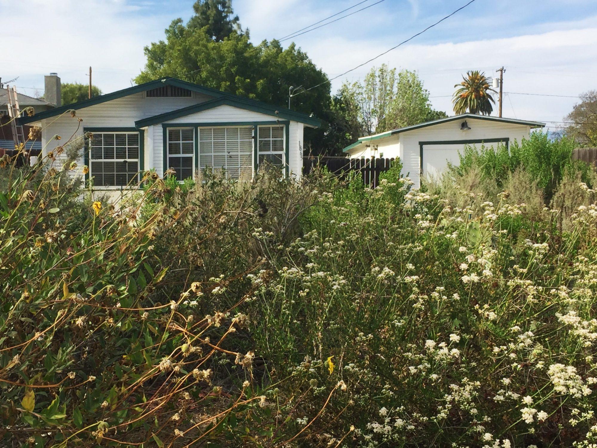 David Freeman\'s Lomita Garden | California Native Plant Society