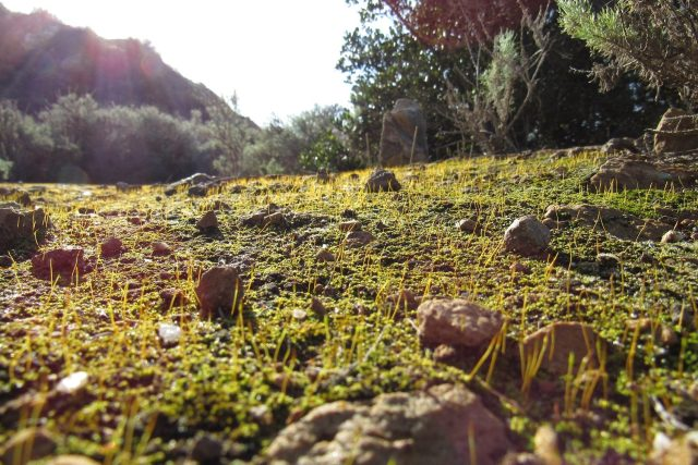 Vegetation Program California Native Plant Society