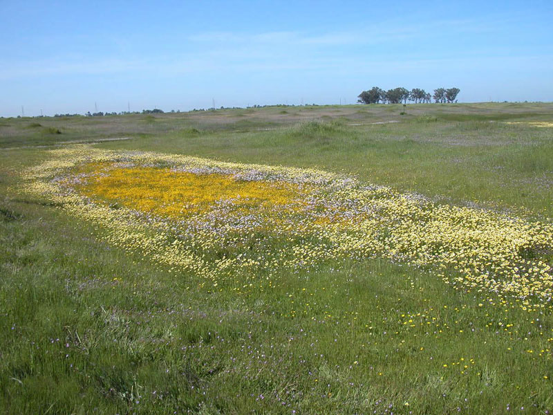 Mather Field Vernal Pools