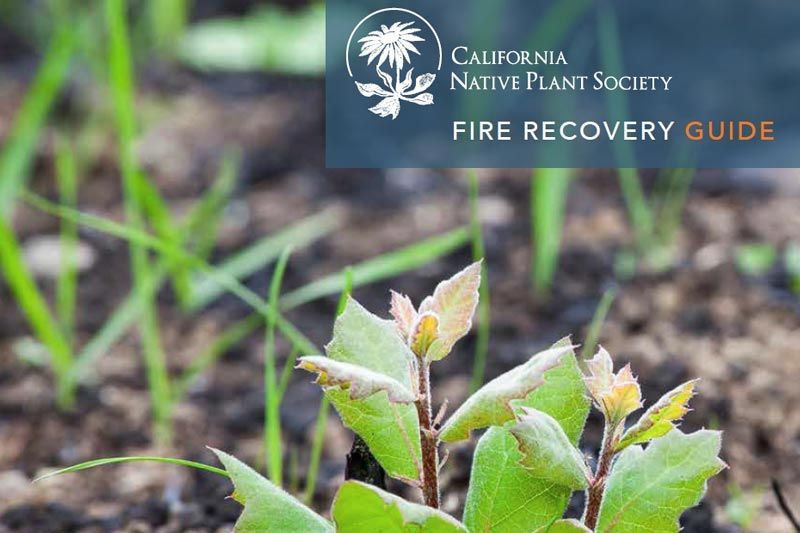 CNPS Fire Recovery Guide