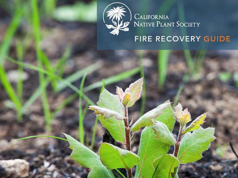 CNPS Fire Recovery Guide cover.