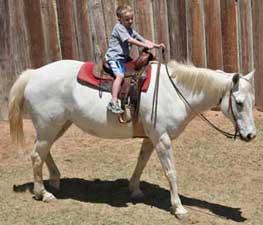 Blue Roans Duns Buckskins Amp Red Roan Quarter Horses For