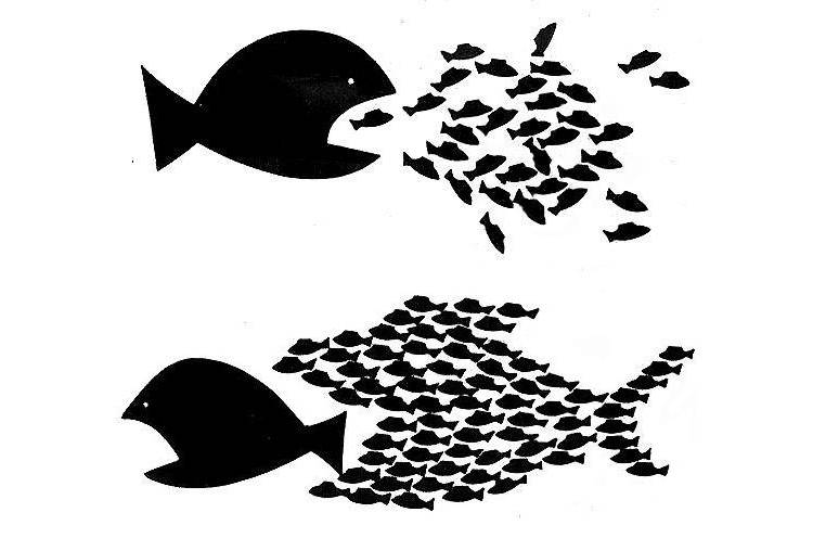 CNT poissons unité diviser pour mieux régner