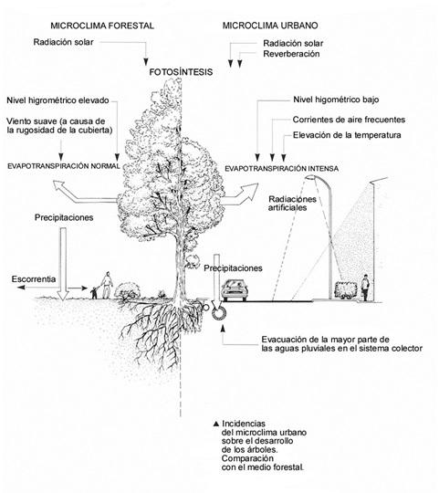 Croquis de Freytet (F.) 1990
