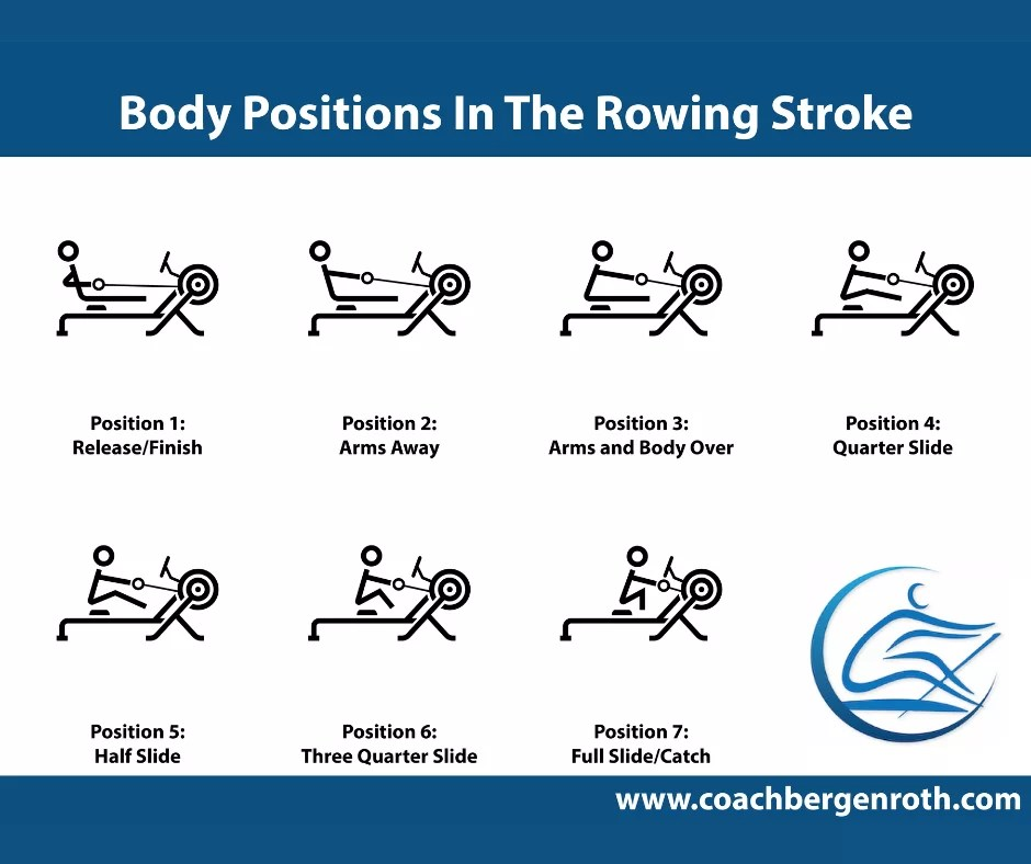 recovery of the rowing stroke