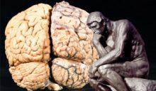 Denker_Gehirn