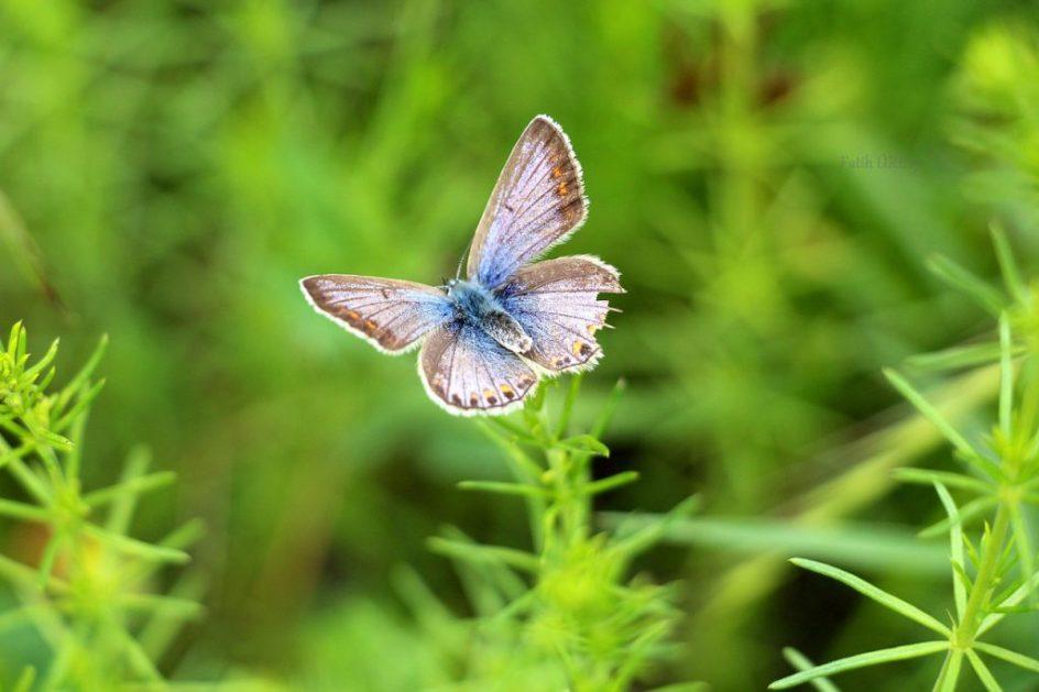 Afbeelding van blauwgrijze vlinder gevonden op coachingmetsanne.com voor artikel over meditatie