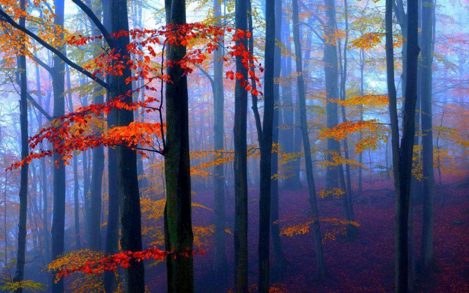 Rust in je hoofd, afbeelding bomen in bos, coachingmetsanne.com