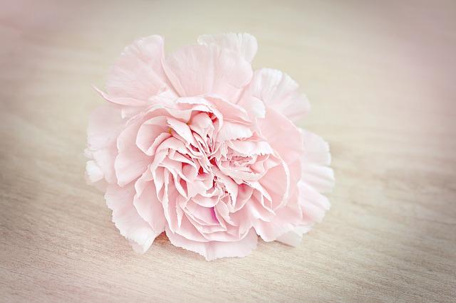 Hoe zou je leven zijn als...? Vragen om over na te denken, foto van roze anjer.