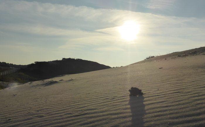 Afbeelding strand in blogZou ik dat ook leuk moeten vinden?