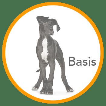 Basiscursus