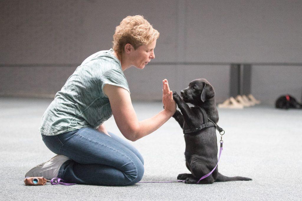 Puppycursus Coachjehond Indoor Hondenschool Lisse