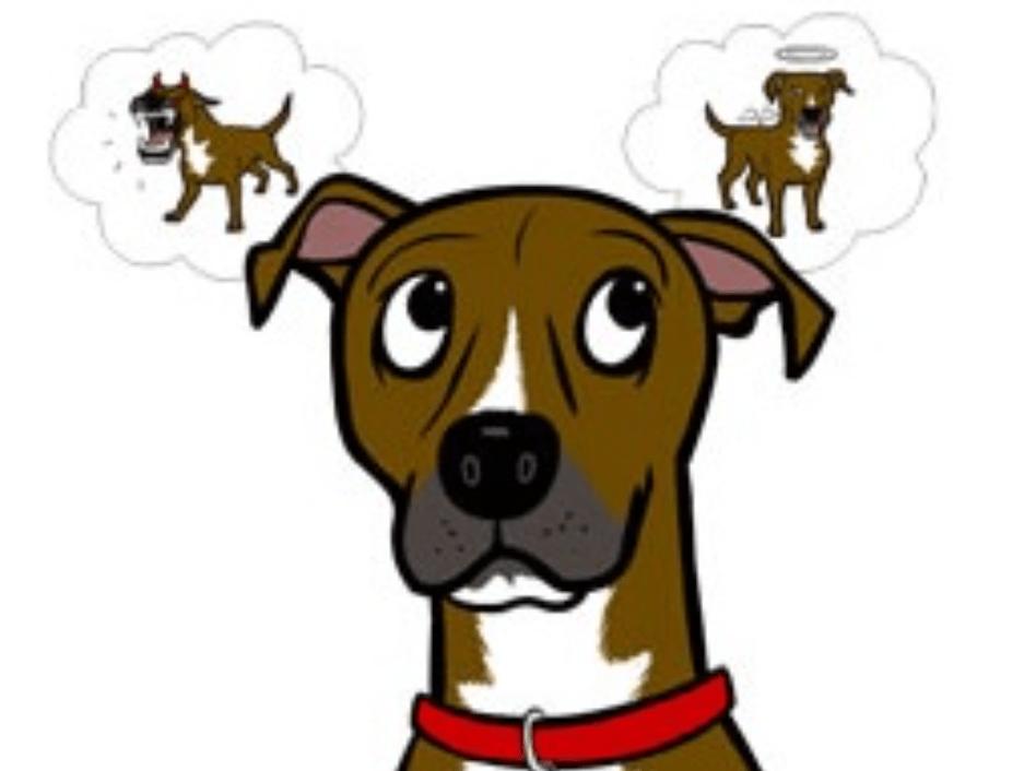 Leer je hond andere keuzes te maken