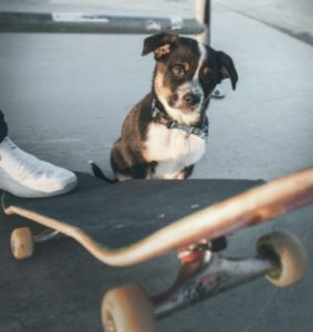 Trucje skateboard