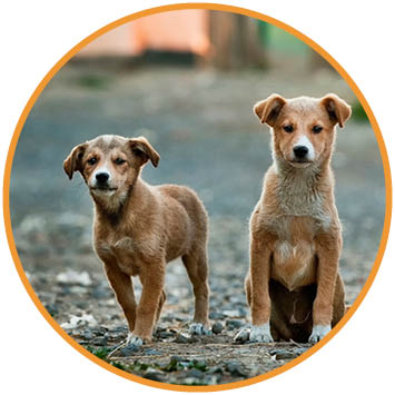 Pups straathond