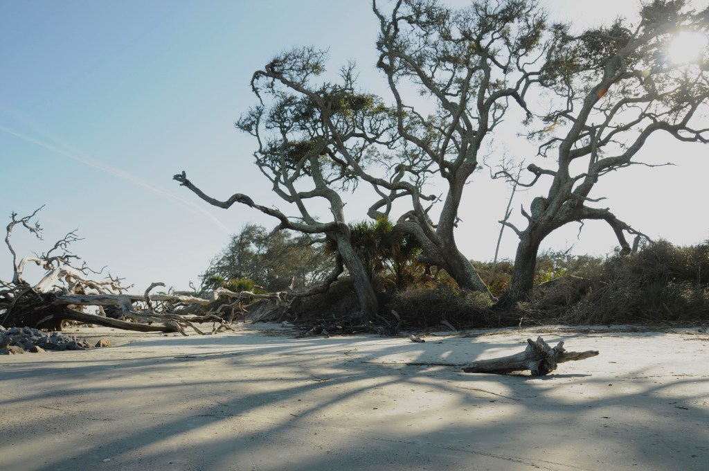 A picture of Driftwood Beach, Jekyll Island, Georgia.
