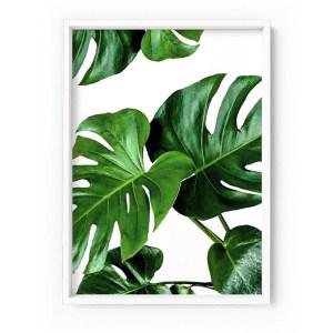 Monstera Leaves Print