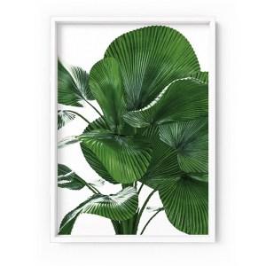 Fan Palm Leaves