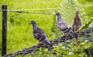 bird pest control net mesh