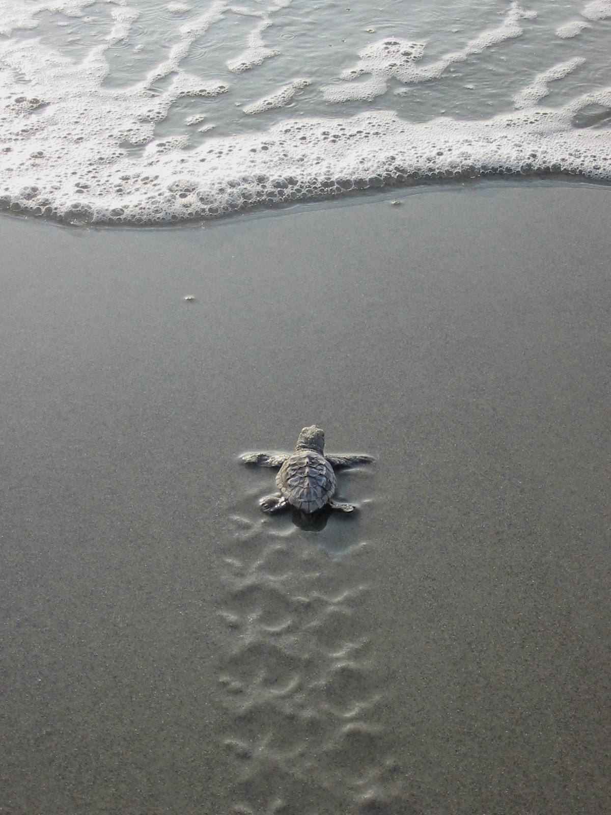 Sea Turtles Dig South Carolina!
