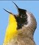 Birding at Hobcaw Barony