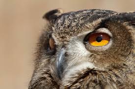 winyah bay owl