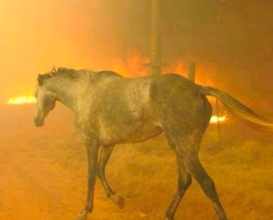 Raging WildFire? ~ Get Your Go Bag Ready and Ranches Practice Large Animal Evacuation