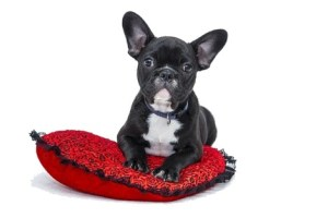 Healthy Valentine S Day Dog Treats Cooking Class For Kids