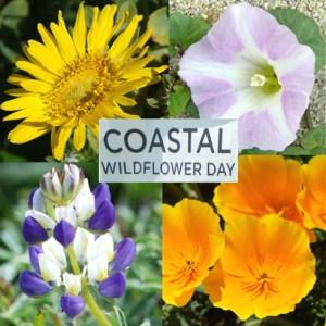 Coastal Wildflower Day @ Francis State Beach, Half Moon Bay  | Half Moon Bay | California | United States
