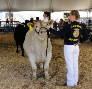 75th Year Anniversary of HMBHS's Future Farmers of America (FFA)
