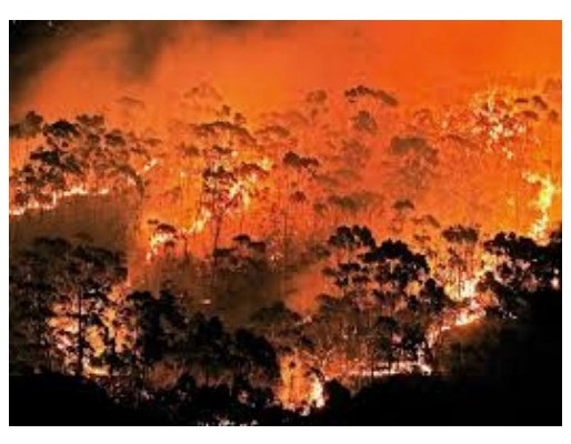 Are Eucalyptus Trees Flammable?